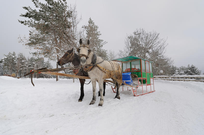 Download Two-horse Sleigh (Zanka-2) stock image. Image of sleigh - 13271017