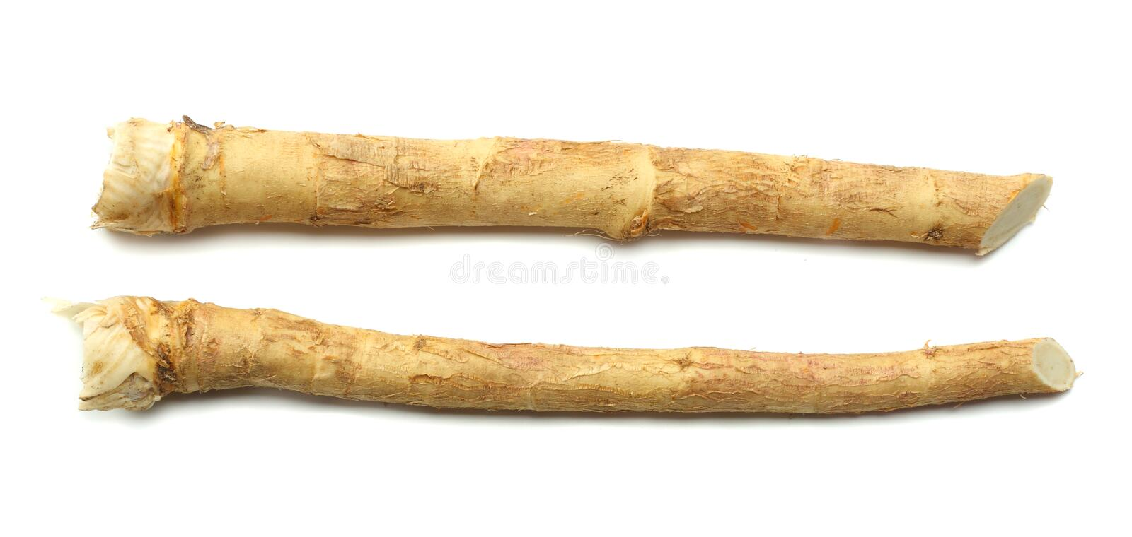 Two horseradish root isolated on white background royalty free stock photo