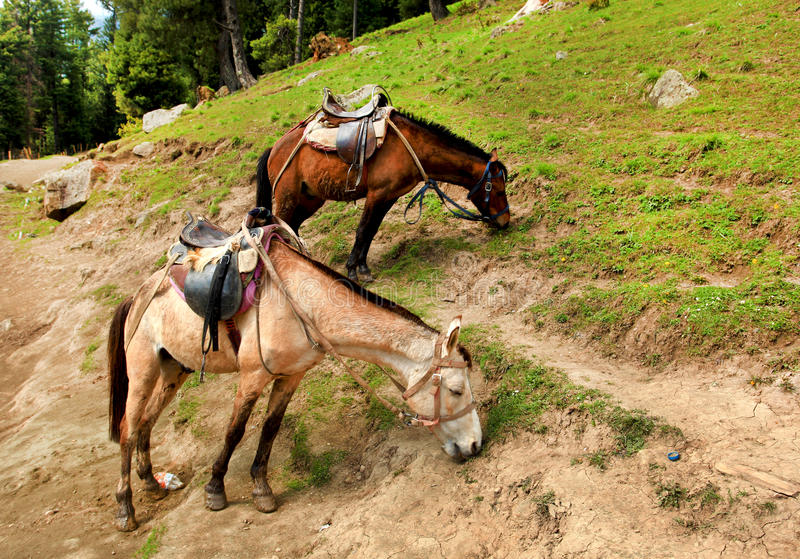 Download Two horses stock image. Image of mountainside, daytime - 24819275