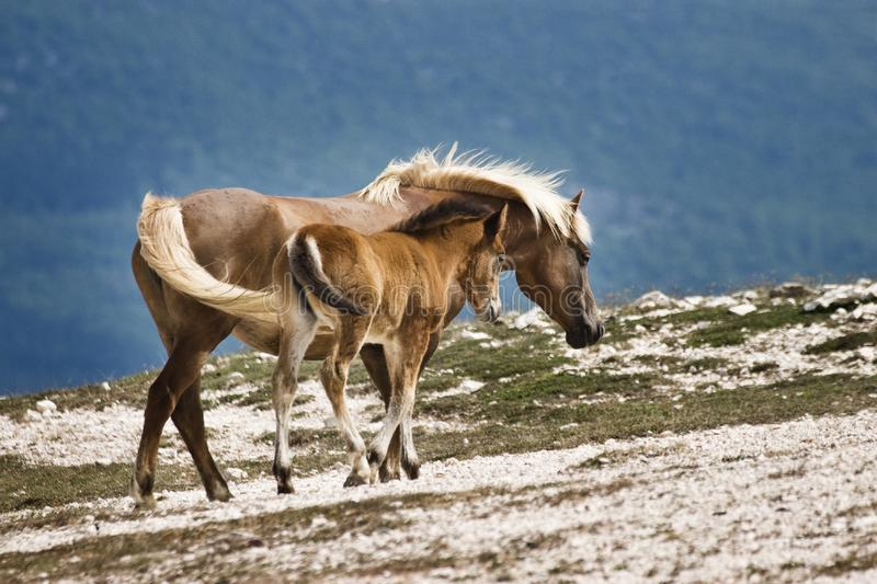 Download Two horses stock photo. Image of protection, young, summer - 3592080