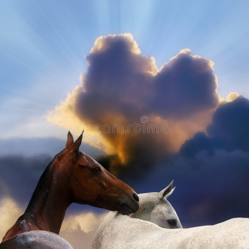 Two Horses Stock Photos