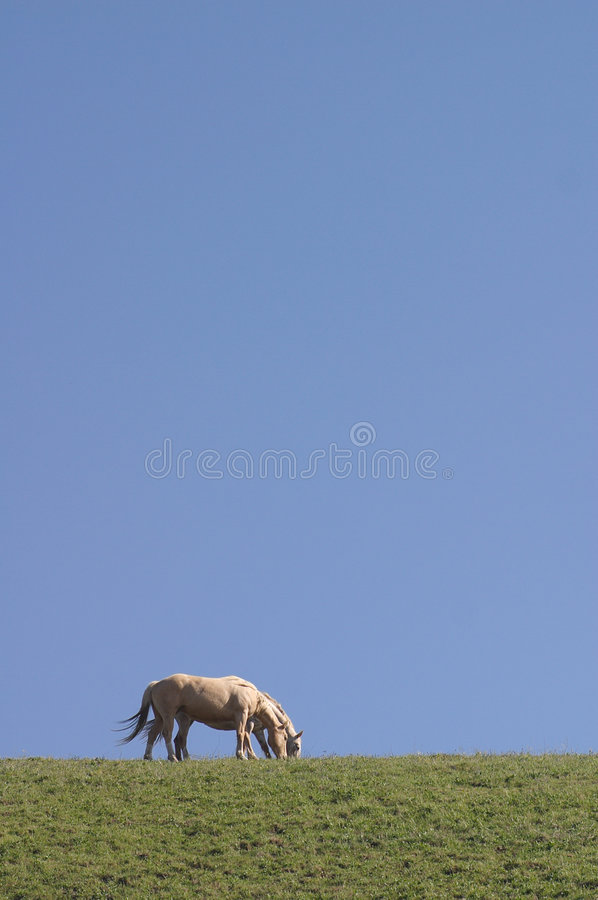 Free Two Horses Royalty Free Stock Photography - 674177