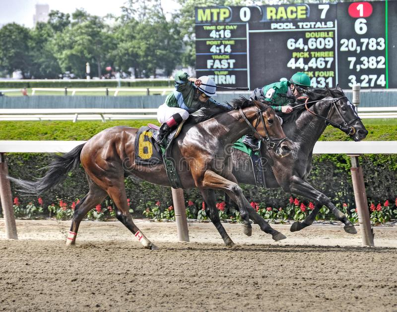 Fantastic Horse Racing Photos From Belmont Editorial Stock