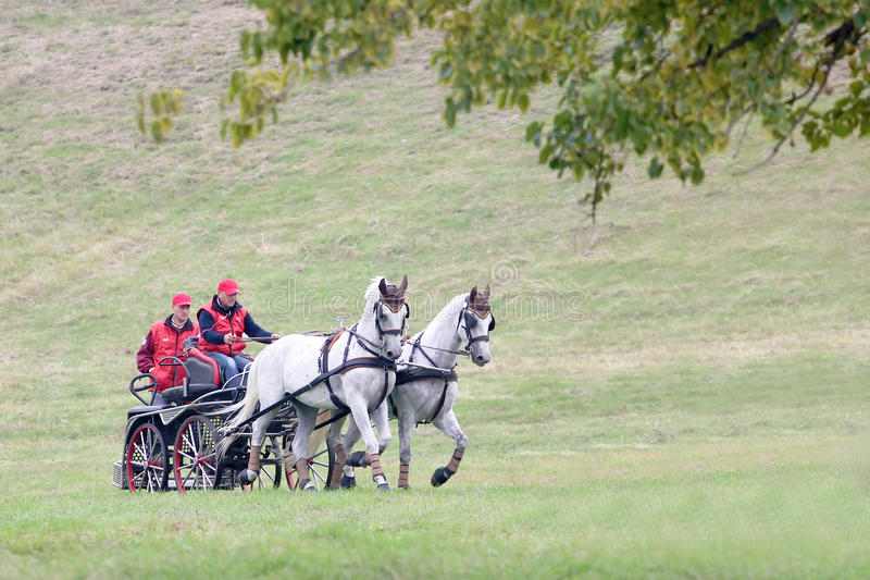 Two horses carriage royalty free stock photo