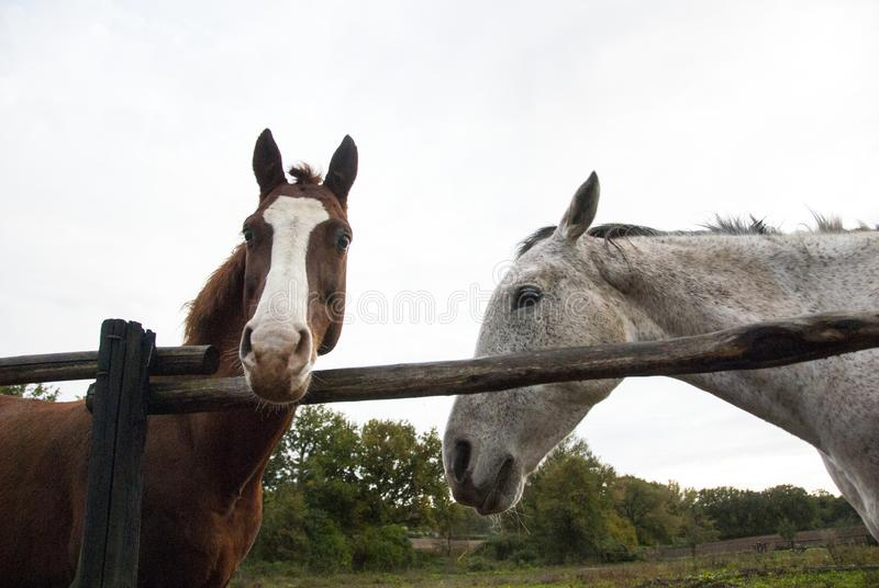 Two horses, two colors. royalty free stock photography