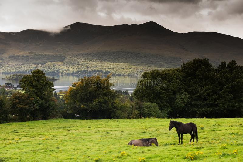 Two horses in a field in the Ring of Kerry, Ireland. Grazing with a lake and mountain in the background stock photos