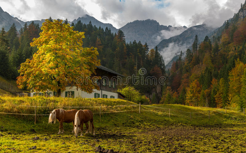 Two horses in front of a beautiful autumn landscape royalty free stock images