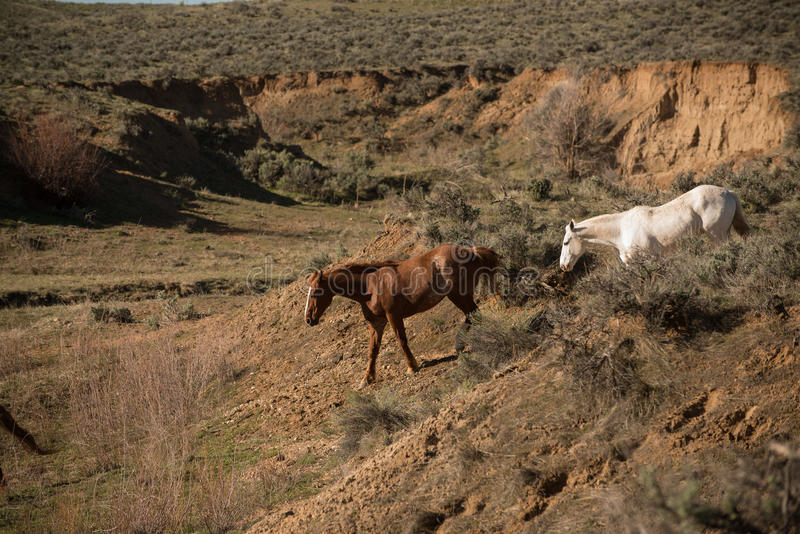 Two horses going down into ravine for water royalty free stock image