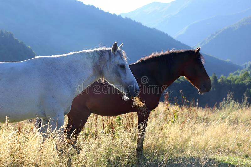 Two horses graze in the mountains at dawn royalty free stock photos