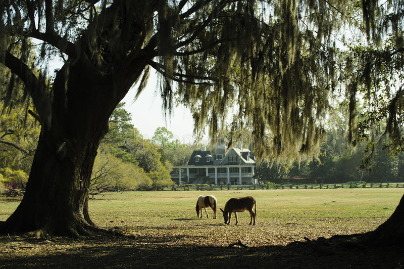 Southern Live Oak Trees In Spring Shade Colorful Azalea ...