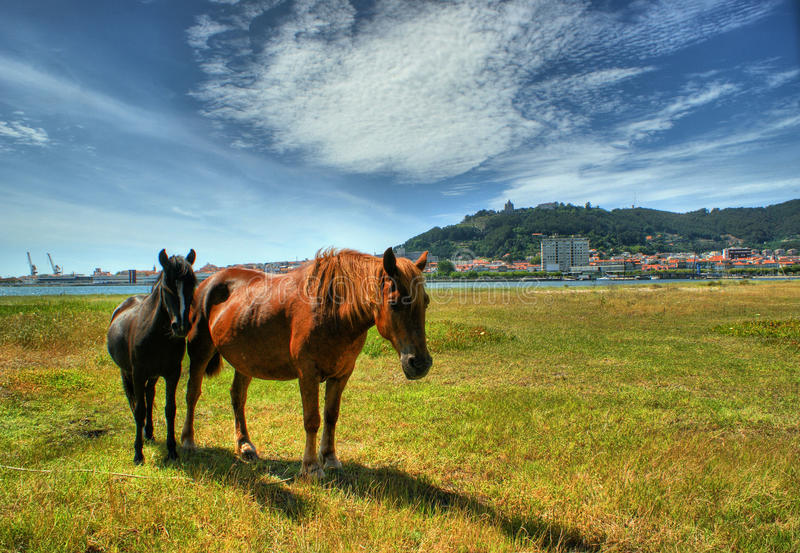 Download Two Horses Grazing In Viana Do Castelo Stock Image - Image: 67105333