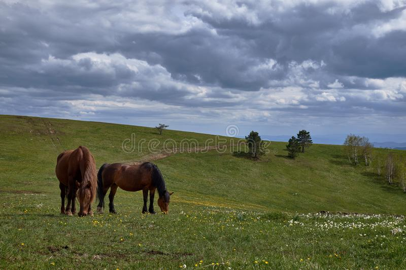 Two horses on green grass stock image