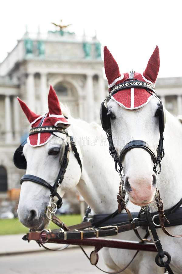 Download Two horses with harness stock photo. Image of austrian - 27323316