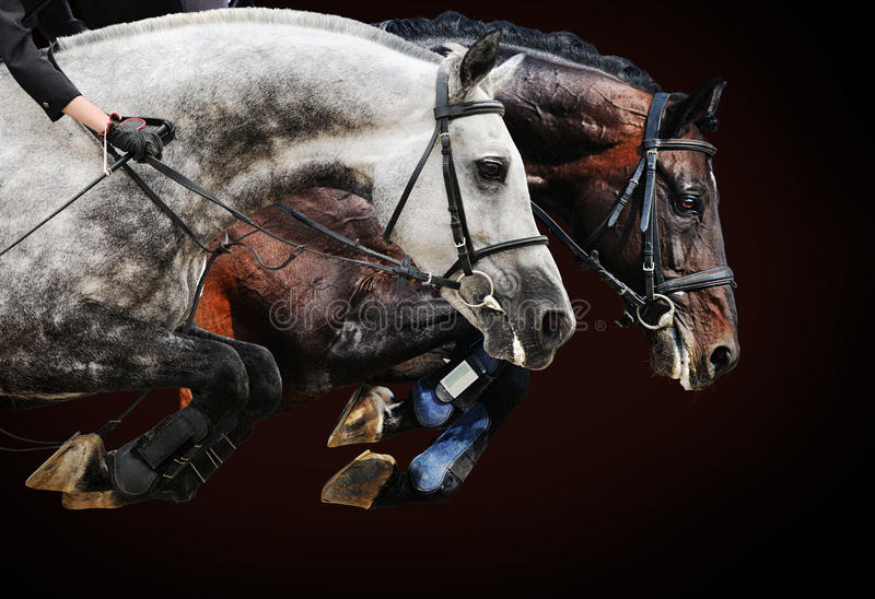 Two horses in jumping show, on brown background. With gradient stock photo