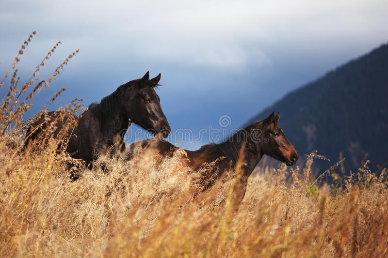 Two horses in mountain stock image