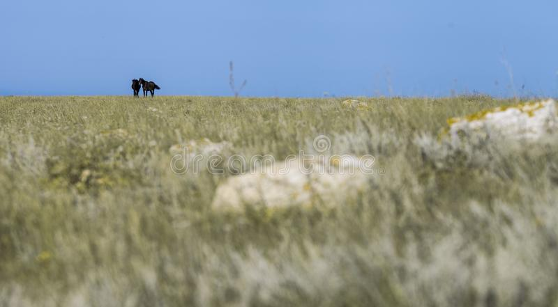 two black horses on plant . stock photo