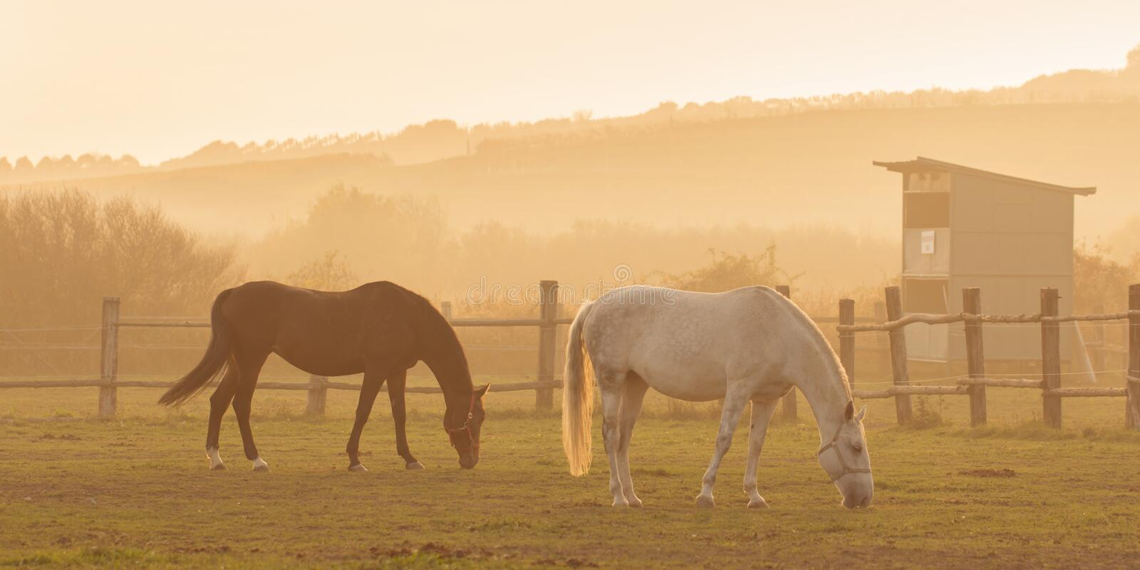 Two horses in sunset royalty free stock photography