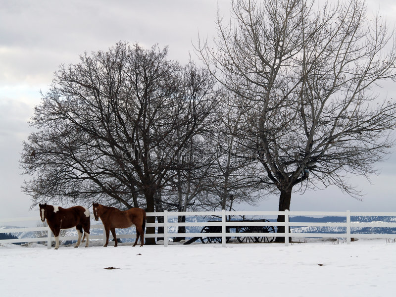 Two Horses on a Winter Day royalty free stock images
