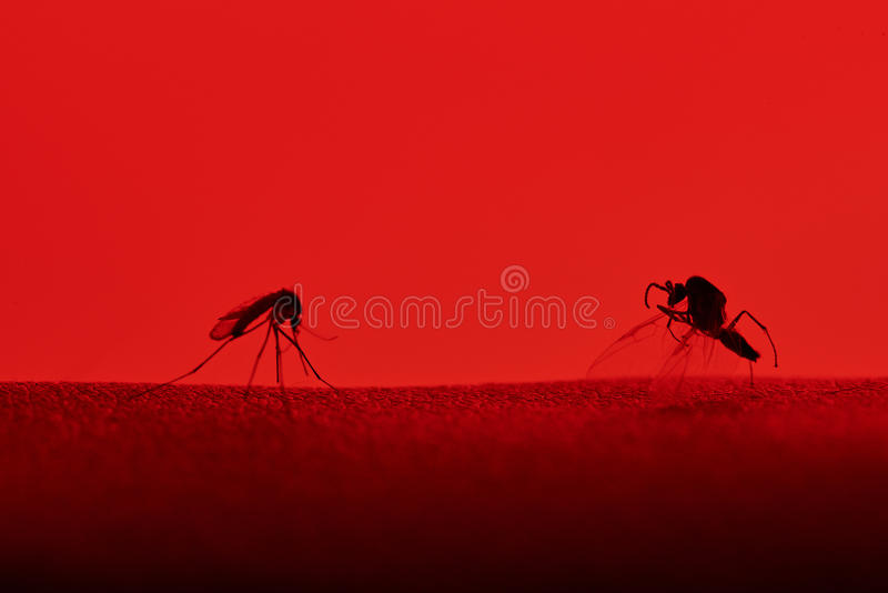 Two insects on skin royalty free stock photo