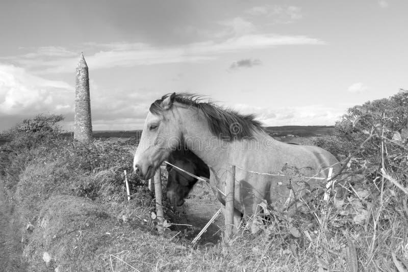 Two Irish horses in black and white