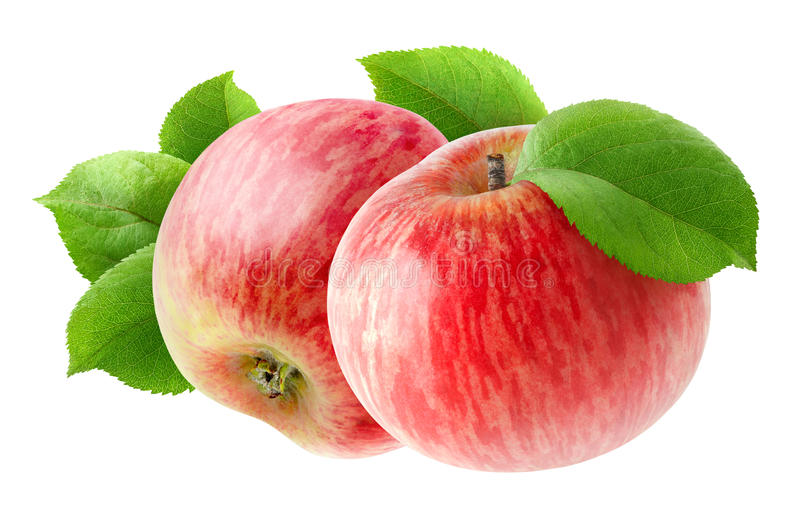 Two isolated red apples royalty free stock images