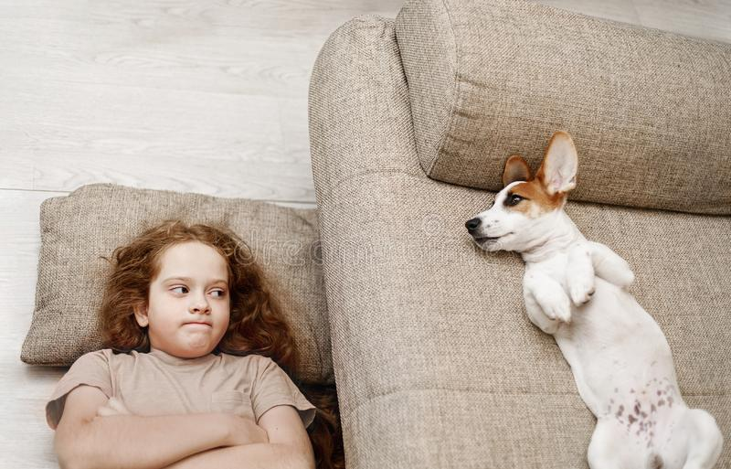 Two Jack Russell are sleeping on the bed, and the owner of the girl is sleeping on the floor stock photography