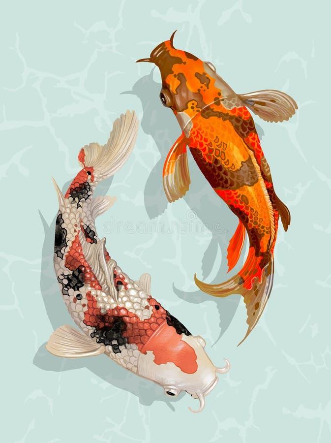 Two Japanese Koi fish swimming stock illustration