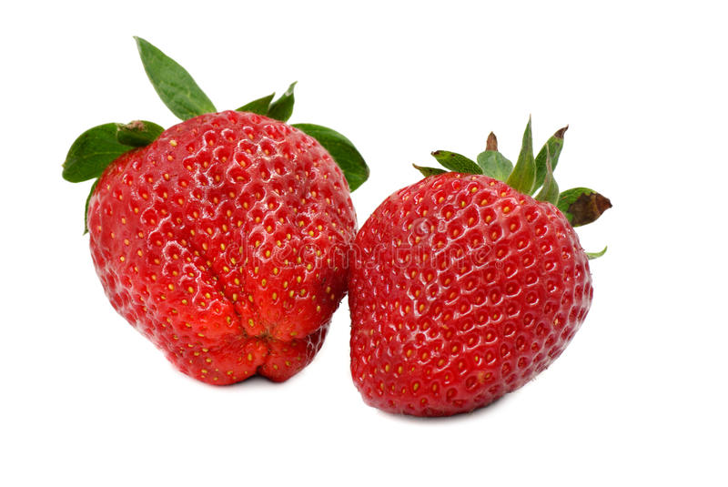 Two juicy strawberries isolated stock images