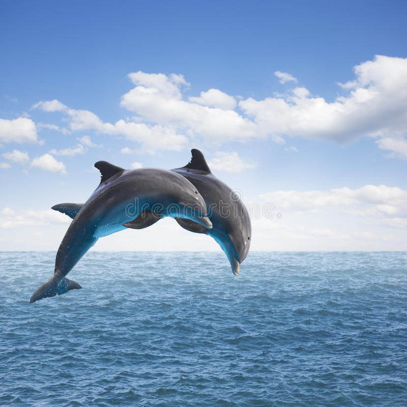 Two jumping dolphins royalty free stock photos