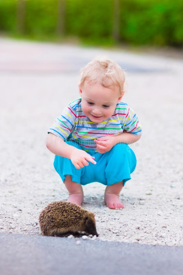 Two kids watching a hedgehog stock photos