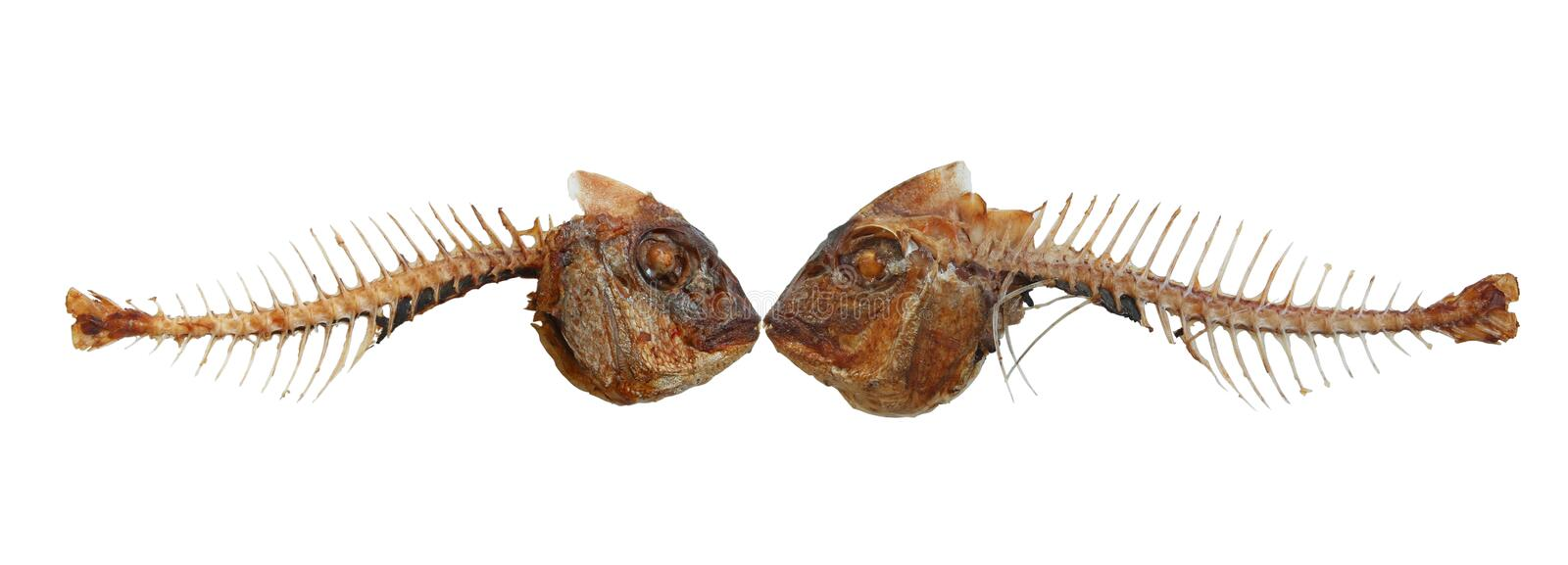 Two Kissing Fish Skeletons Stock Images