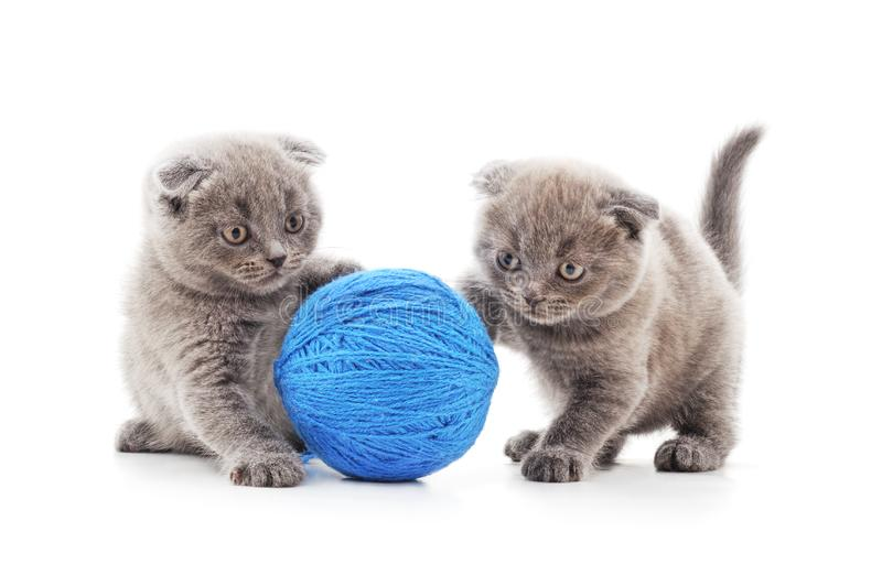 Two kittens with balls royalty free stock image