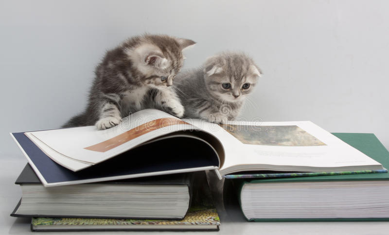 Two kittens are considering a book stock image