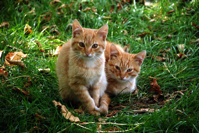 Two kittens in in the grass stock images