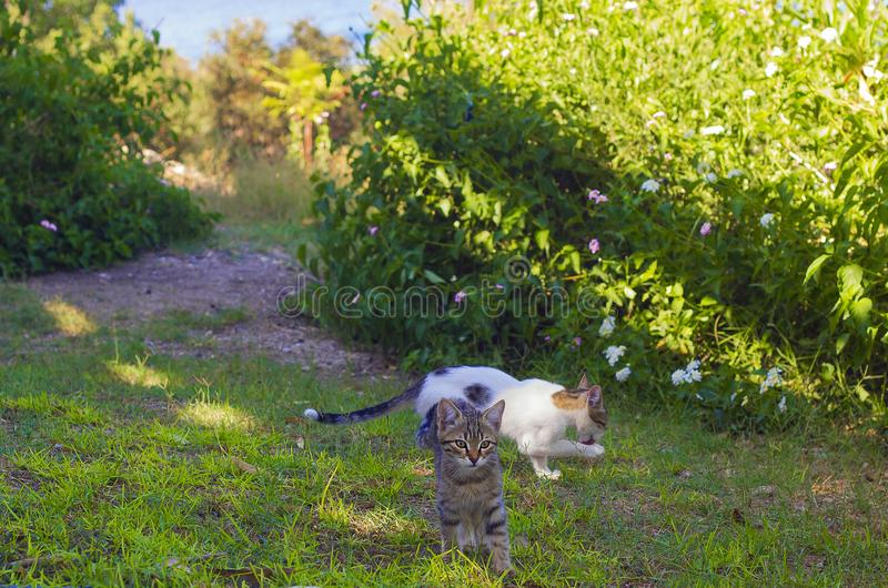 Two kittens in grass on summer day royalty free stock images