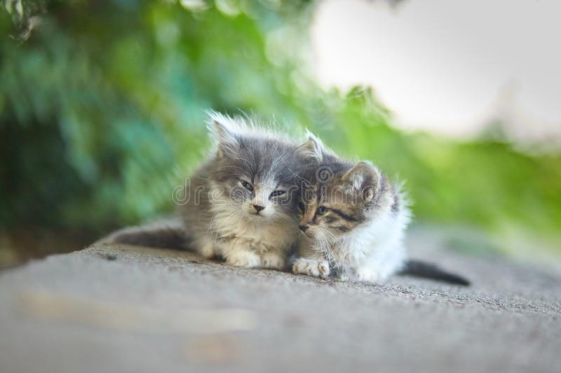 Two kittens on green background. In back  light and soft focus royalty free stock photo