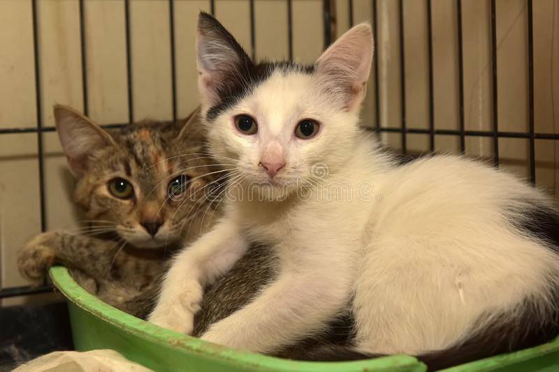 Two kittens lie together in a cage. In a shelter stock images