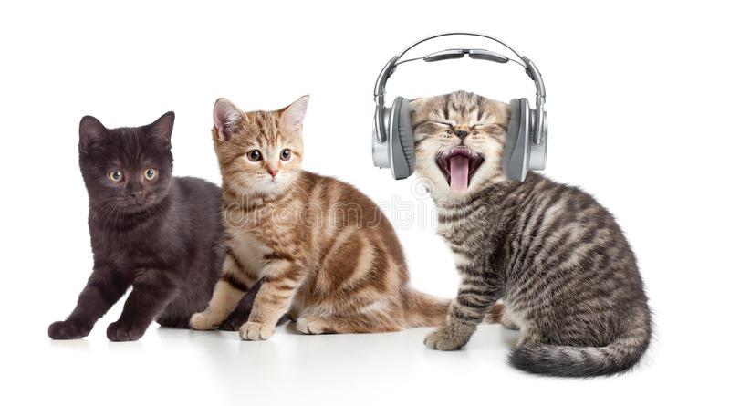 Two kittens and little cat listening to music in. Two kittens and little cat listening to music stock images