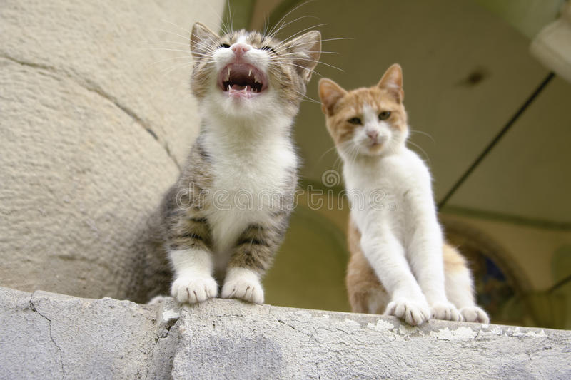Two Kittens Sitting on a Step royalty free stock photos
