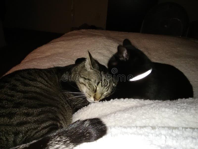 Kitty Love stock photos
