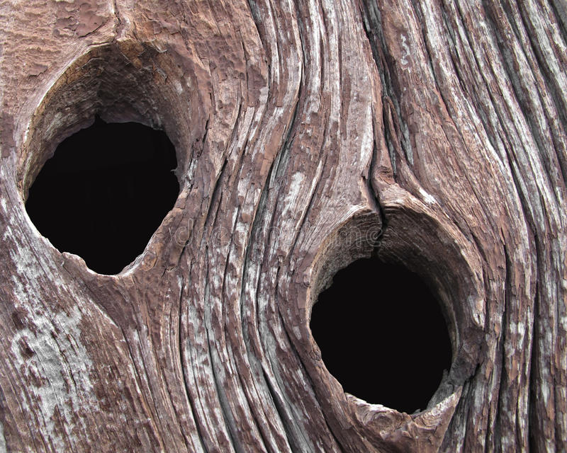 Two knot holes in an old barn board stock photography