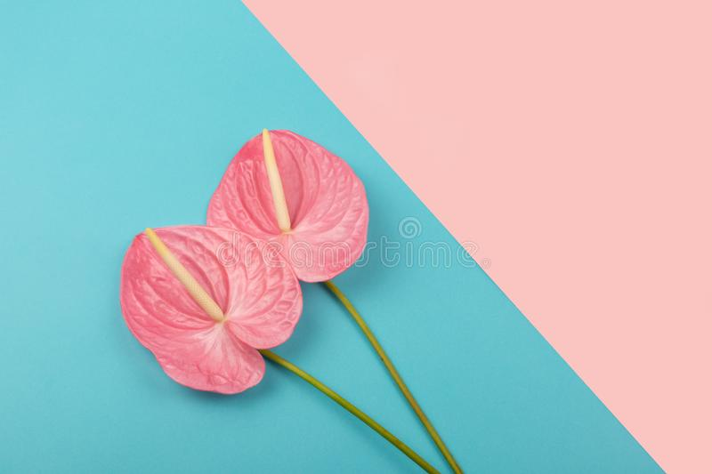 Two laceleafs on the multicolor background stock photos