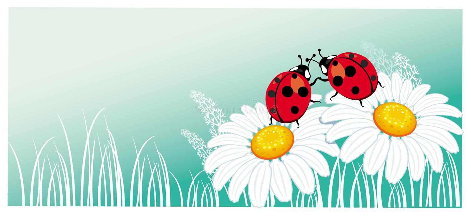 Two ladybirds on the chamomile stock illustration