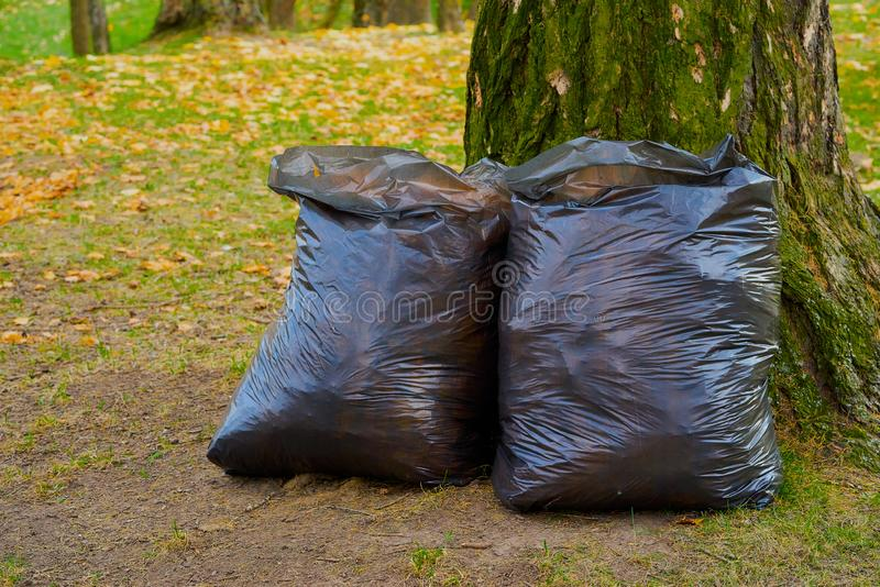 Two large garbage bags. Two large plastic garbage bags are filled and located on the lawn near the tree trunk royalty free stock images
