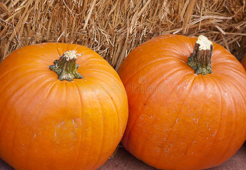 Two Large Pumpkins On Straw Stock Photography