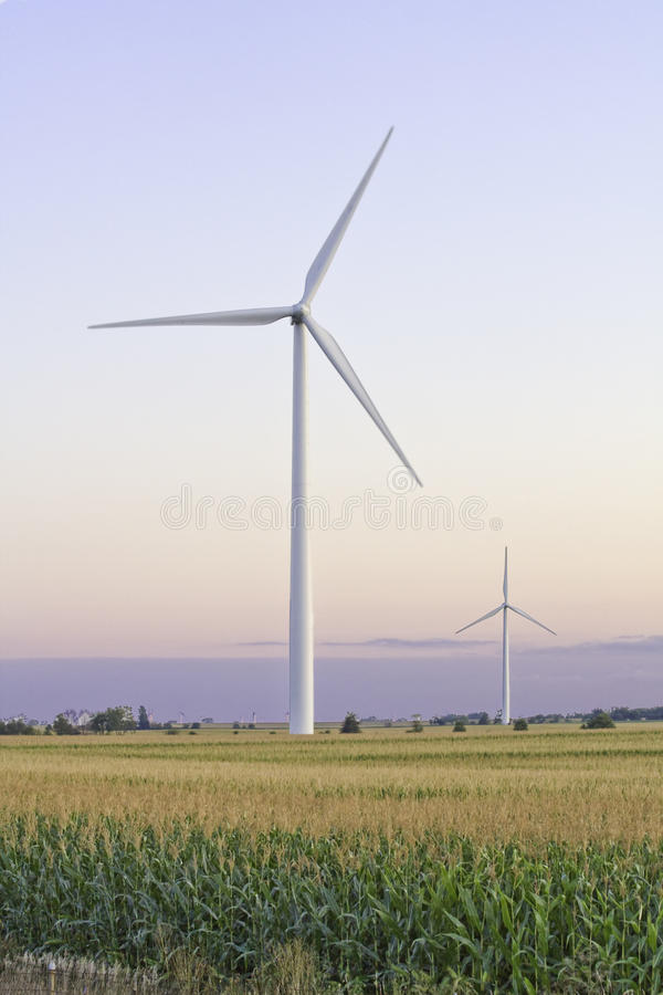 Two large windmills in a cornfield vertical stock image