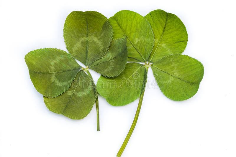 Two 4-Leaf Clovers royalty free stock photos