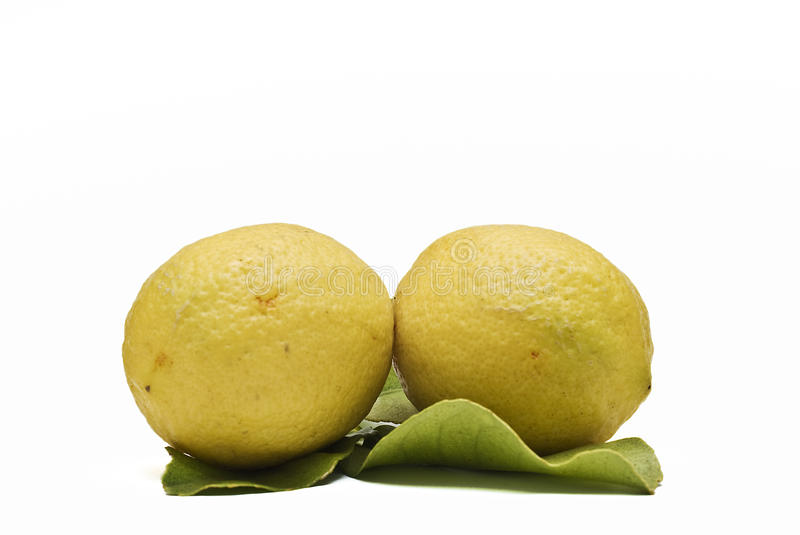 Download Two lemons on its leaves. stock photo. Image of isolated - 12618008