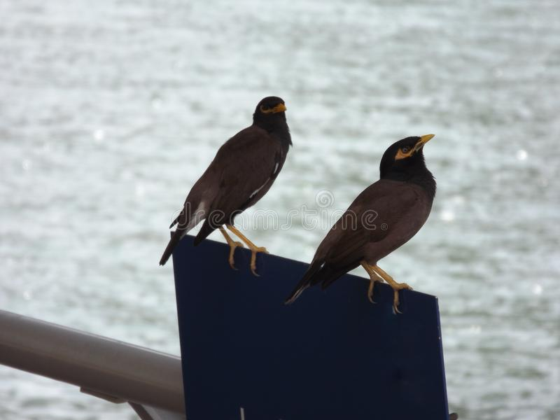Two little birds royalty free stock photo