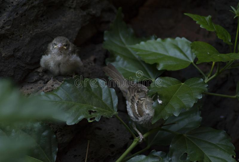 Two little birds staring at you royalty free stock photography